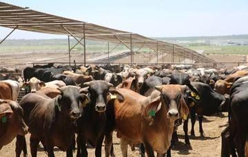 Beneficia el PROGAN a más de 25 mil productores de Sonora