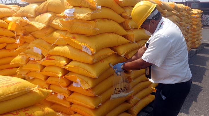 El personal del SENASICA está en vigilancia permanente para impedir la entrada del gorgojo pues puede dañar hasta en 75 por ciento productos almacenados, principalmente granos y cereales.