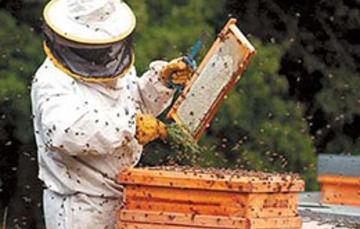 Prevén aumento de compras de miel de empresas europeas