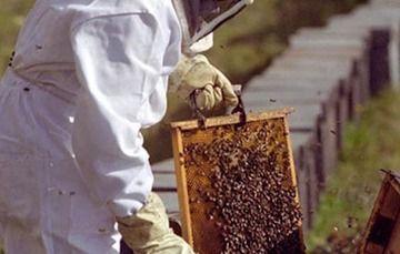 Avanza Q. Roo, en buenas prácticas de producción de miel