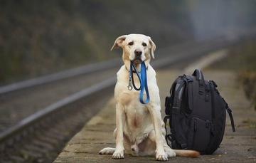 Ahora Tu Mascota Puede Viajar Contigo Fácilmente Cuando Visitas México