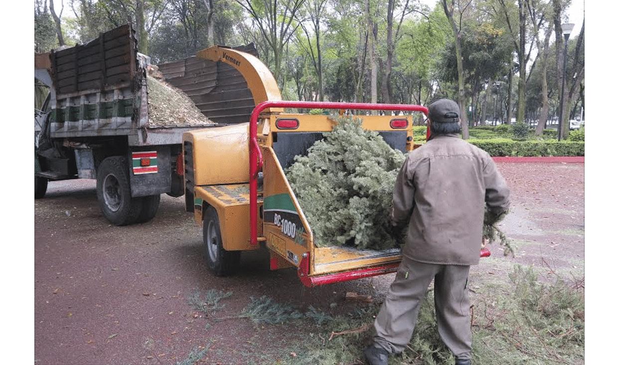 Los árboles secos serán transformados en composta que servirá como abono para nuevas plantaciones.