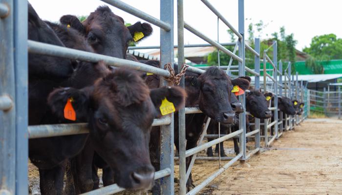 El SENASICA establece medidas de control integral en las zonas endémicas para reducir al mínimo las pérdidas en la producción del ganado.