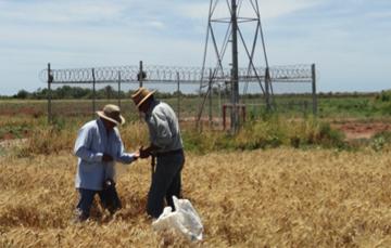 Producción agrícola en distritos de riego con problemas de salinidad, bajo condiciones propiciadas por el calentamiento global