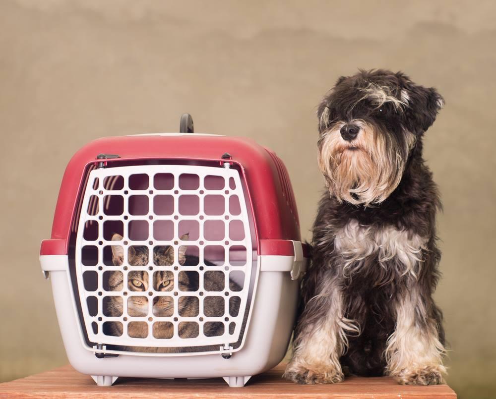 ¡Para efectos sanitarios sólo se consideran mascotas a perros y gatos!