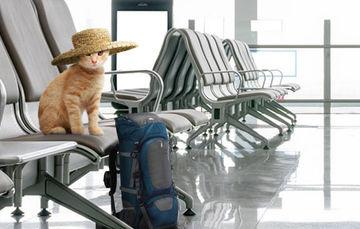 Programa Mascota Viajero Frecuente