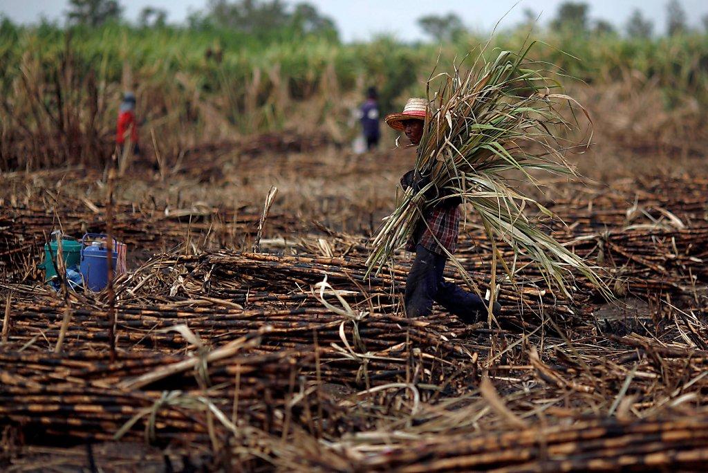 Programa Producción para el Bienestar, tiene el objetivo de incrementar la productividad de caña de azúcar para productores de pequeña y mediana escala.