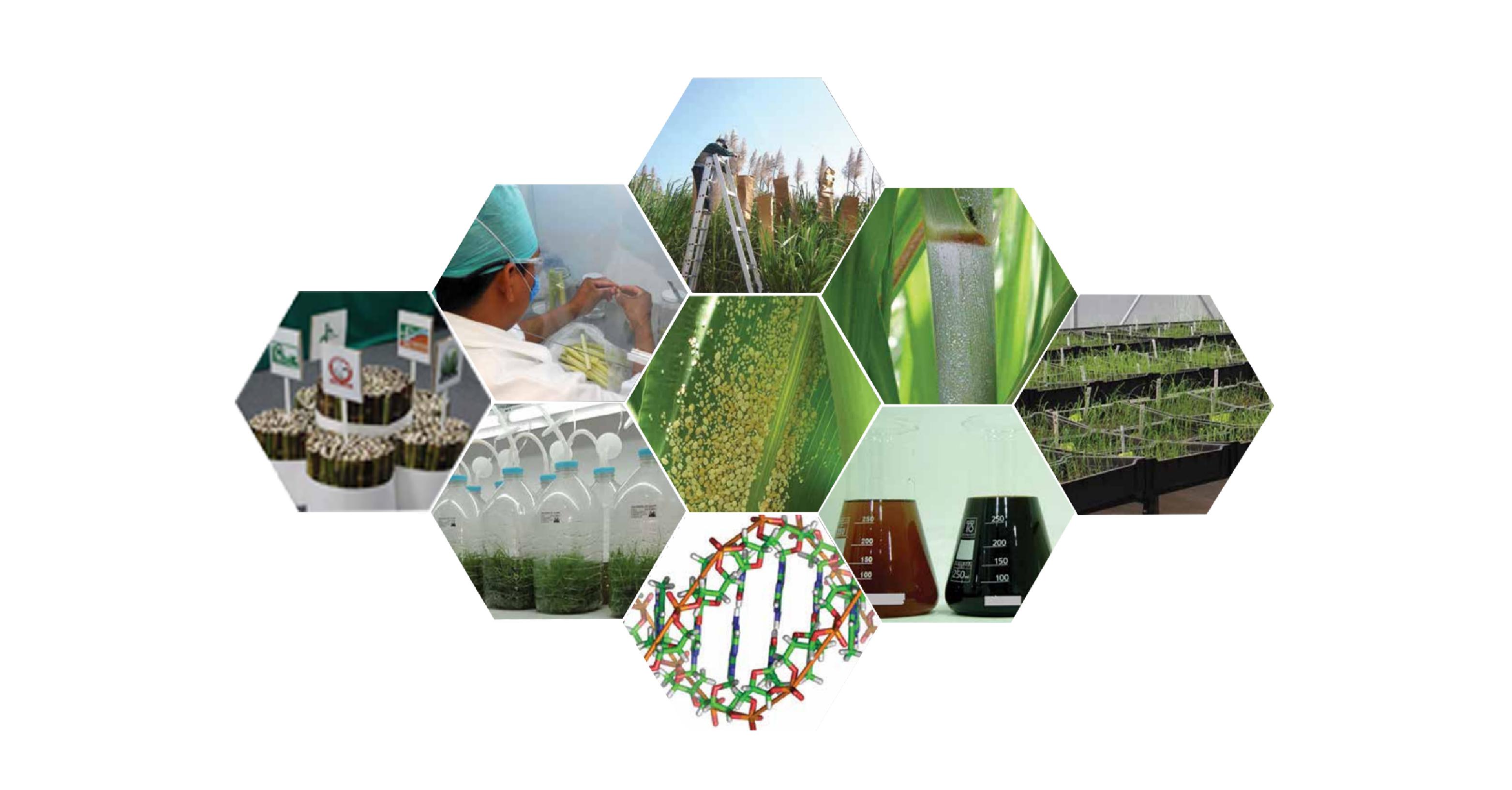 Agenda Nacional de Investigación, Innovación y Transferencia de Tecnología de la Caña de Azúcar