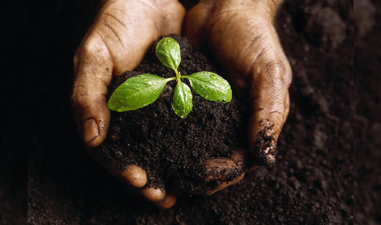 Vista general de manos sosteniendo planta
