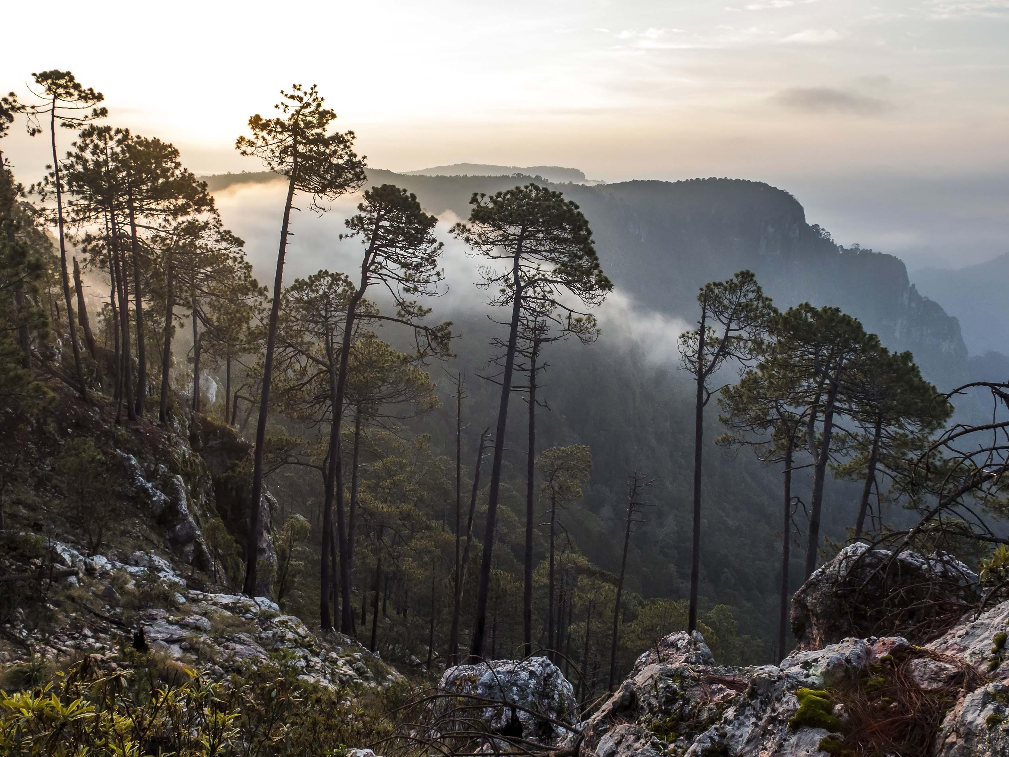 Sierra de Manantlan_Archivo Conanp