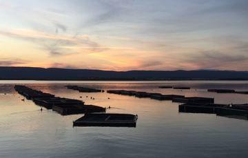 La acuacultura y su paso por el tiempo