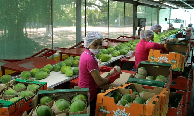 El SENASICA realiza las gestiones pertinentes para que ingresen al mercado coreano uva de mesa, aguacate de Jalisco, mango, calabaza kabocha, toronja, naranja, lima, papaya, tomate, café verde, chile, nuez y productos de bovino