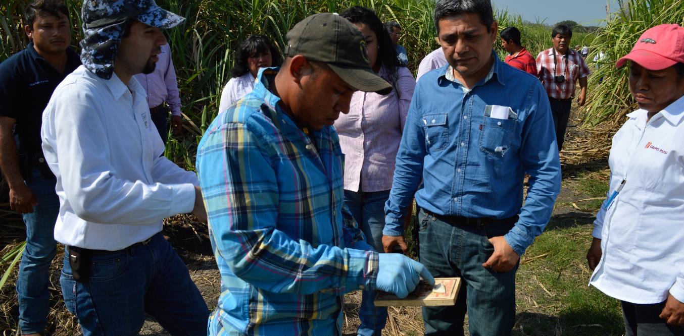 La capacitación deriva de los acuerdos establecidos entre el órgano desconcentrado de la SAGARPA, la Unión Nacional de Cañeros y la Confederación Nacional de Propietarios Rurales.