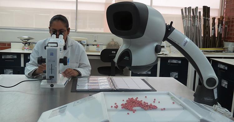 Análisis en el Laboratorio Central de Referencia del SNICS