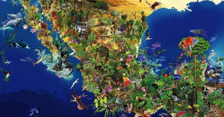 En México se encuentra representado más del 10 por ciento de la diversidad biológica de todo el mundo, cuando apenas ocupamos el uno por ciento de la superficie terrestre.