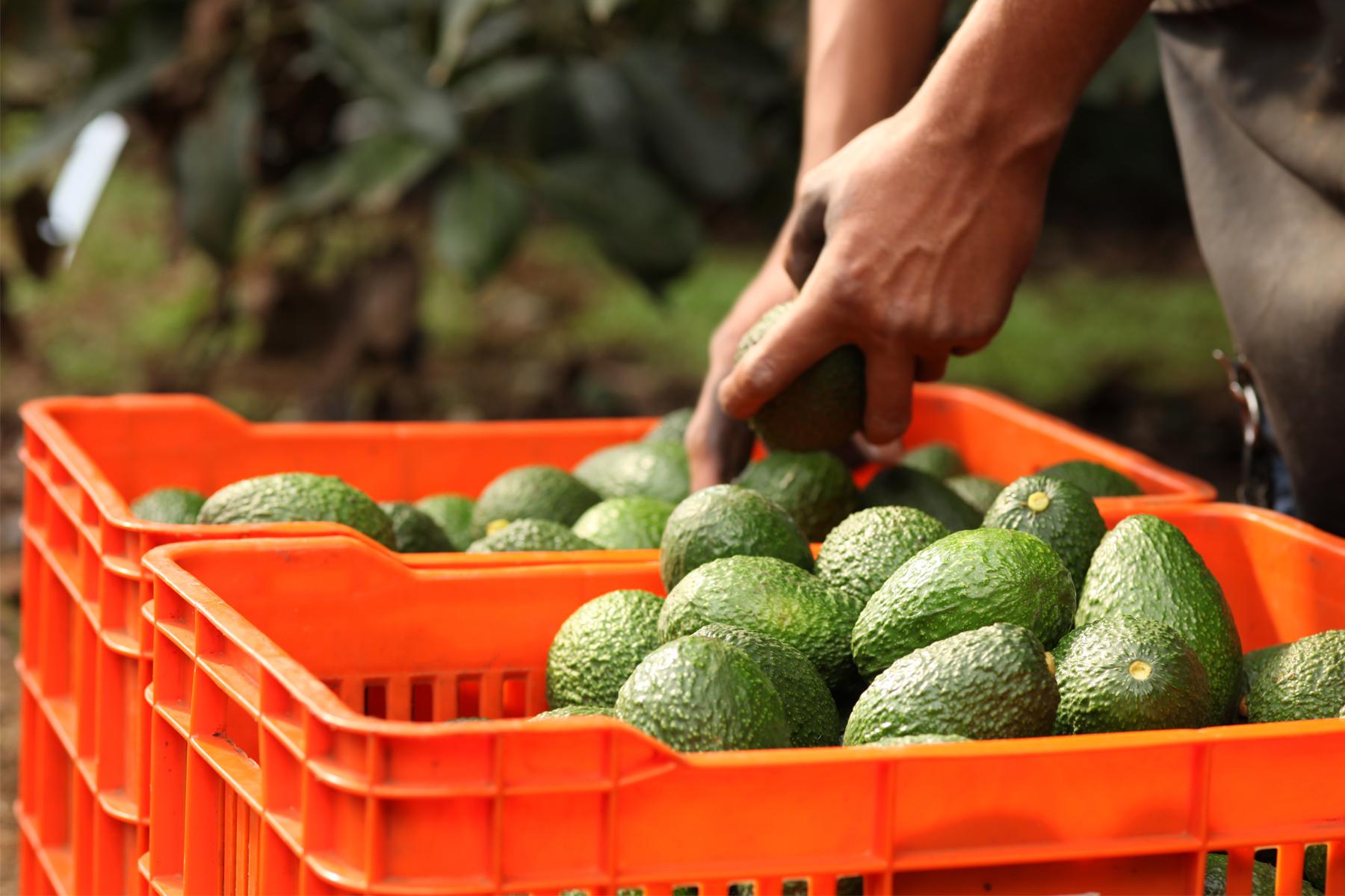 La agricultura es la principal actividad generadora de alimentos