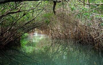 En las últimas décadas los ecosistemas muestran una acelerada pérdida y alteración antropogénica.