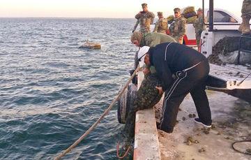 En cumplimiento con la normatividad, los Oficiales Federales de Pesca de la CONAPESCA, con apoyo de personal de la Secretaría de Marina (SEMAR), regresaron el producto al mar, a su hábitat natural, ya que se encontraba vivo.