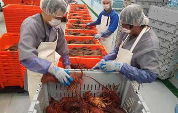 El 25 por ciento de la producción pesquera nacional está certificada, mientras que en el mundo el promedio es de apenas el 12 por ciento.