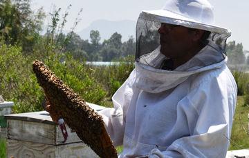 Jaime Soto, apicultor mexicano