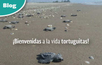 Tortugas Lora