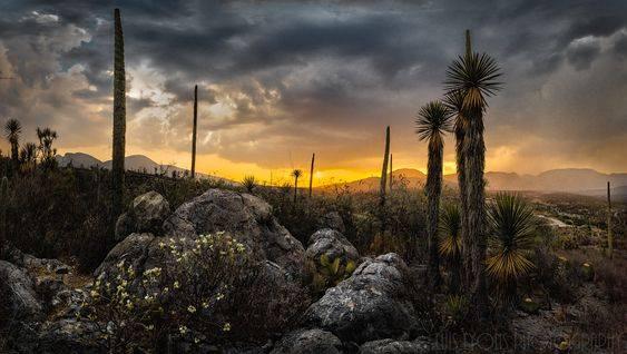 El sitio Tehuacán-Cuicatlán se ubica en un complejo sistema de sierras y valles que generan una gran biodiversidad y diferentes ecosistemas.