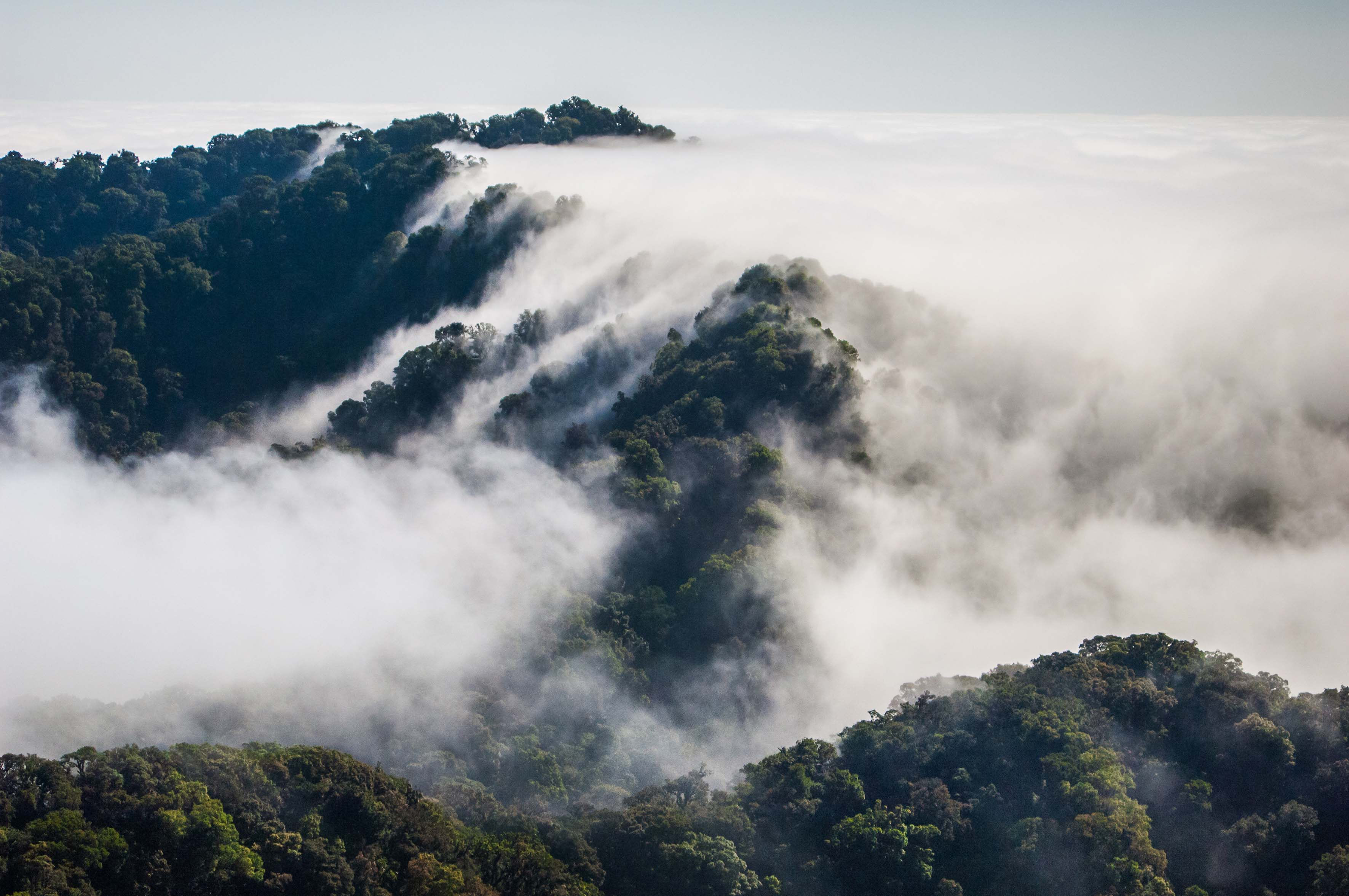 panorámica del Bosque de Niebla en Chiapas