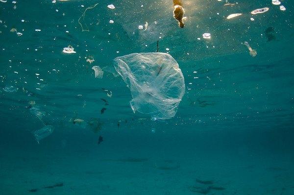 Piden A La Onu Reconocer El Medio Ambiente Limpio Como: Sin Plástico, Clamor En El Día Mundial Del Medio