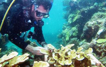 Buzo cultivando corales