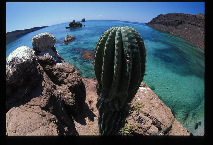 El parque nacional alberga, tanto en sus islas e islotes, como en su área marina adyacente, un número elevado de especies de flora y fauna, entre ellos ejemplares que no pueden ser encontrados en otra parte del mundo, las llamadas especies endémicas.