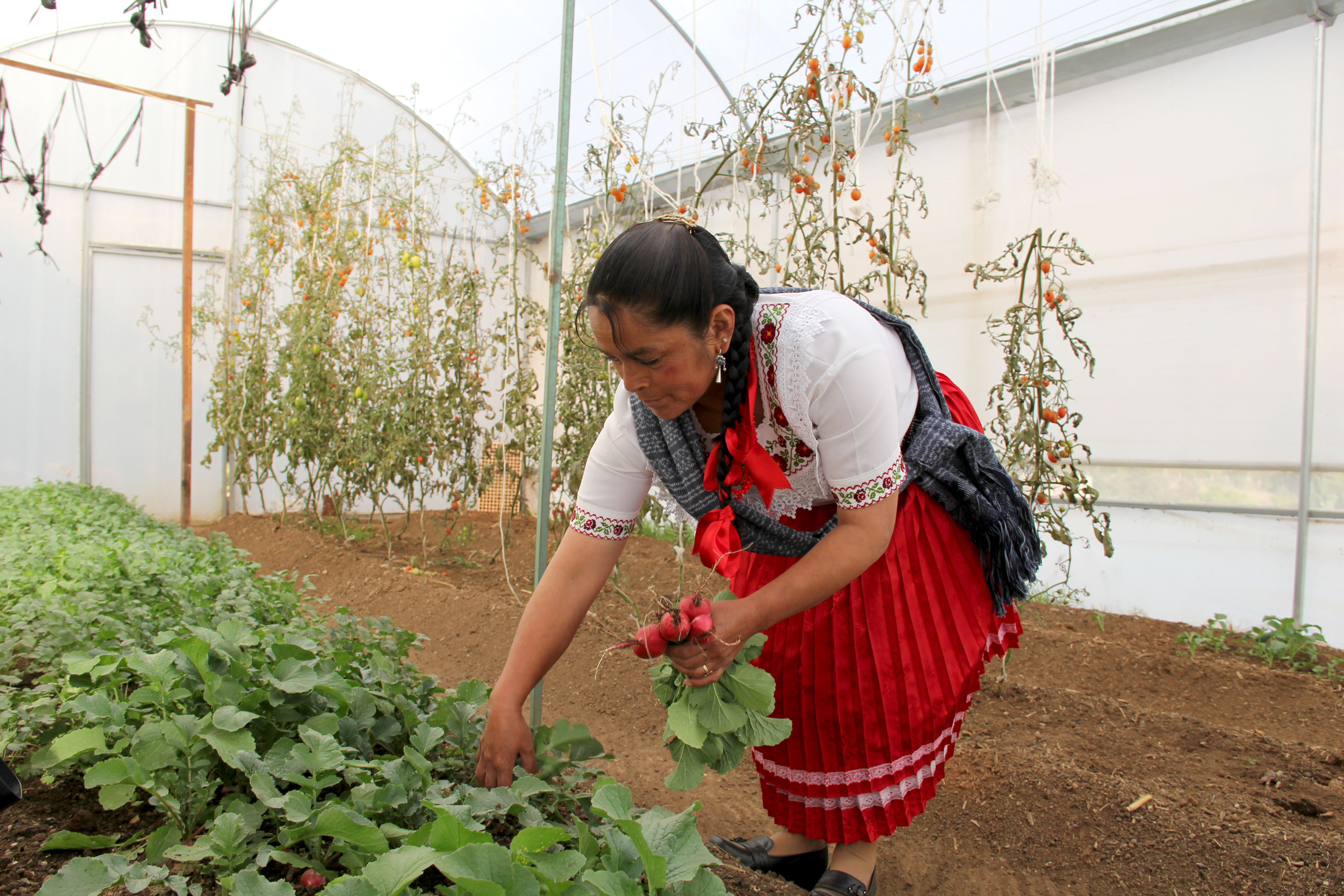 Mujer PROSPERA, Estado de México.