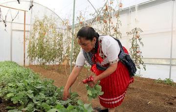Las mujeres desempeñan un papel importante en la agricultura.