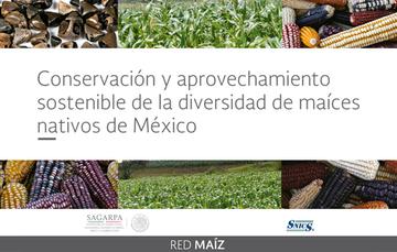 Conservación y aprovechamiento sustentable de la diversidad de maíces nativos de México