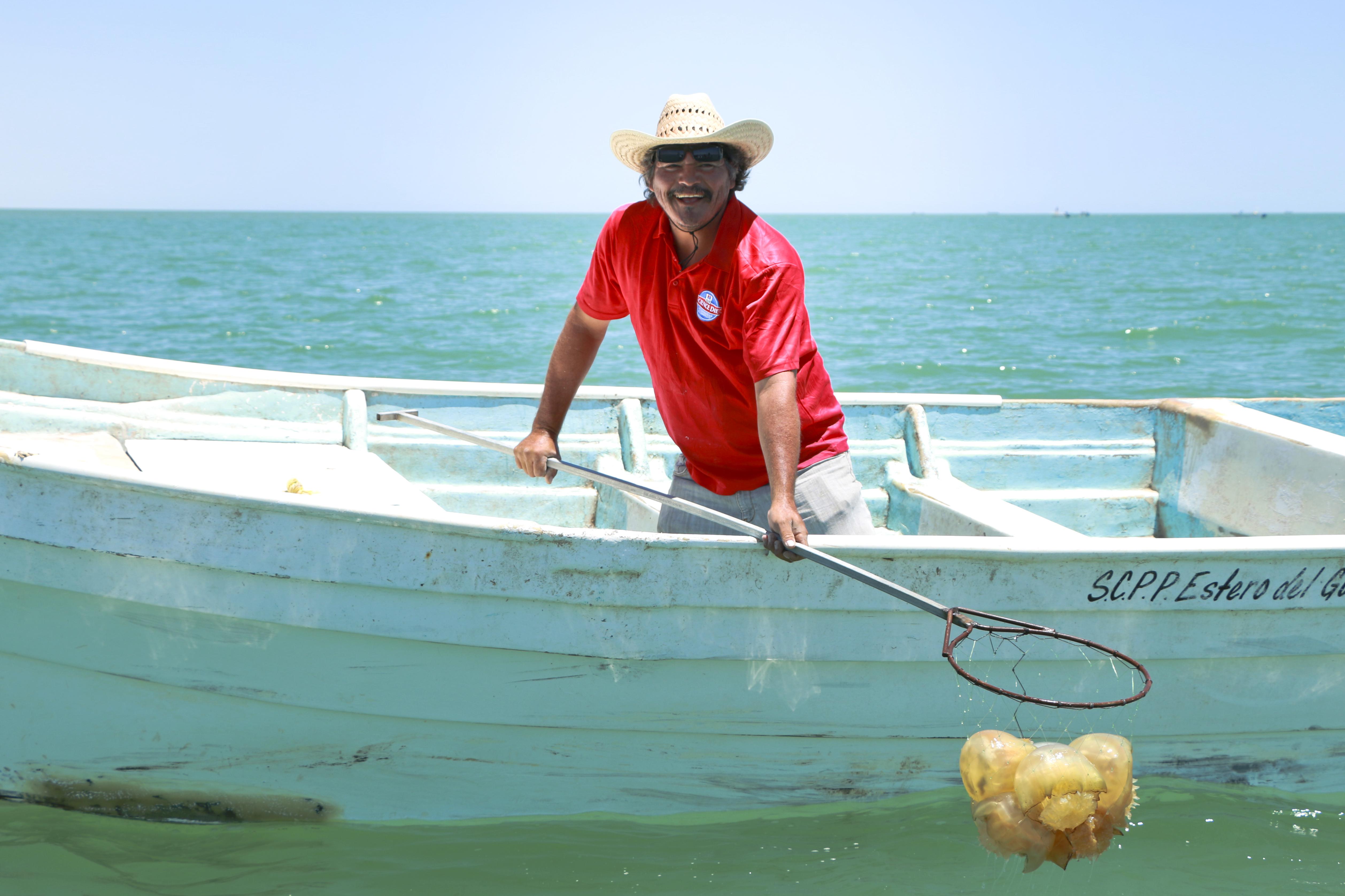 """Para la pesquería de bola de cañón, la Comisión Nacional de Acuacultura y Pesca (CONAPESCA) emitió para este 2018, un total de 540 permisos para el mismo número de lanchas que realizan la pesca de """"aguamala""""."""