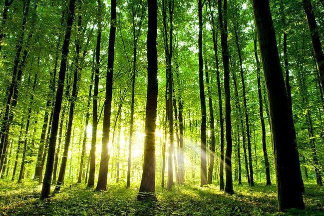 Bosques Templados De Mexico Riqueza Forestal Y Belleza Escenica Secretaria De Medio Ambiente Y Recursos Naturales Gobierno Gob Mx