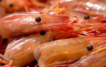 Cascaras de camarón