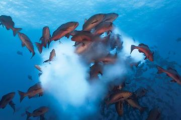 La mayoría de los animales acuáticos se reproduce mediante el proceso de freza.
