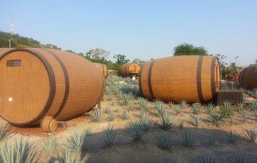 Campo de agave y barricas de tequila y mezcal