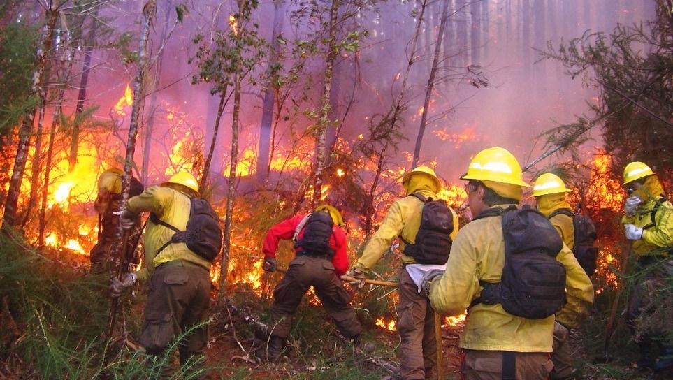 Grupo de combatientes de incendios forestales realizando brecha cortafuego durante incendio.