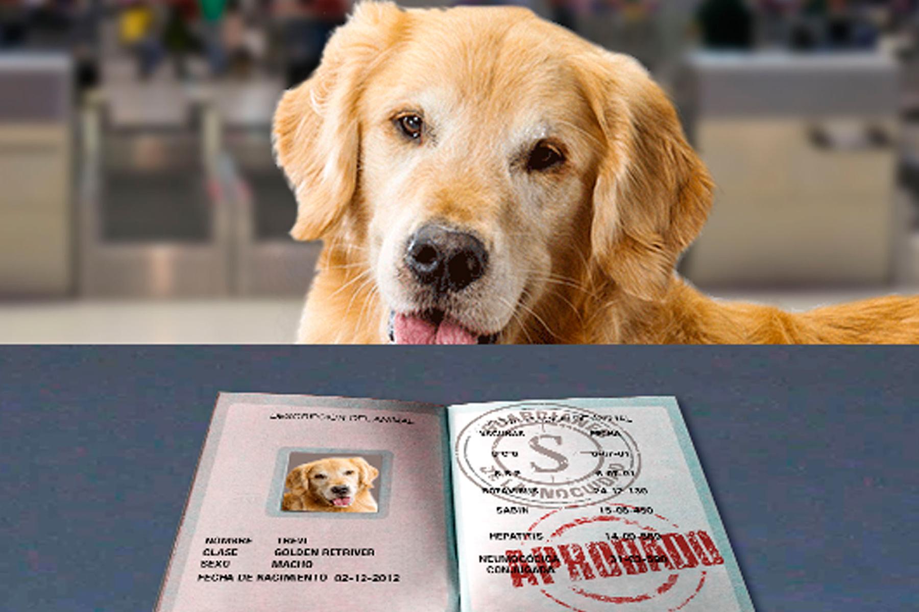 Perro con identificaciones