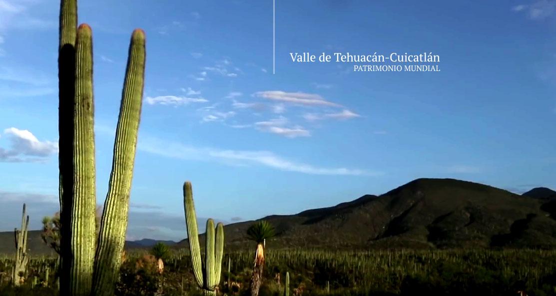 Banner del Valle de Tehuacán-Cuicatlán: Hábitat Originario de Mesoamérica