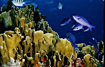 Frontal de grupo de peces rodeando a coral.
