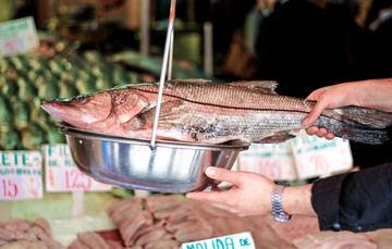 Robalo, un producto pesquero y acuícola en incremento