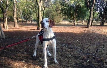 La actividad física que se realiza al pasear a una mascota ayuda a disminuir la posibilidad de sobrepeso, obesidad, hipertensión y diabetes