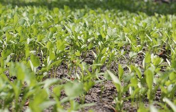 Plantas y alimentos que se producen en las chinampas