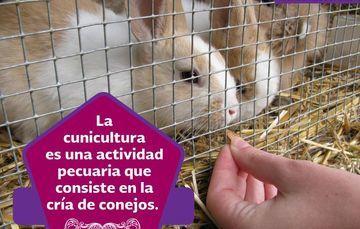 LOS PRINCIPIOS DE LA CUNICULTURA EN TU HOGAR