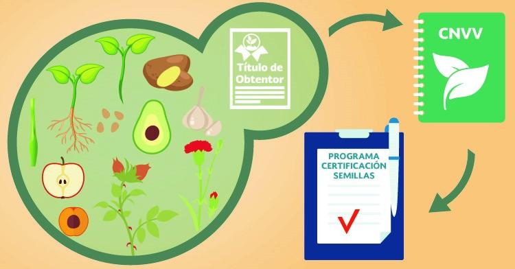 Modalidad de inscripción al CNVV para ingresar a los programas de certificación de semillas