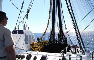 Maniobra de la red en barco atunero