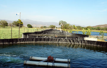 Detecta SENASICA Virus de la Tilapia del Lago en granjas acuícolas