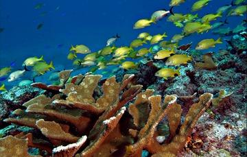 Submarina de cardumen de peces en coral.